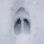 Hoof Print in Snow